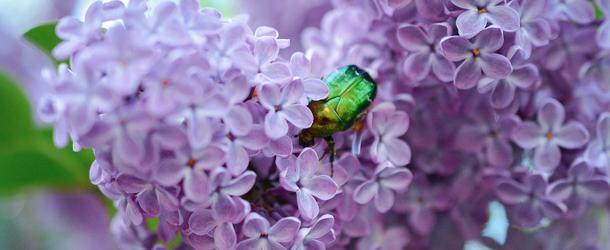Aprile tremendo fiorire – Bello non è ciò che piace ma ciò che apre